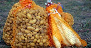 zirkuspaedagogik-kartoffeln-und-keulen