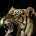 Verbot für wilde Tiere im Zirkus